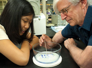 Roger Hendrix, Distinguished Professor of Biological Sciences in Pitt's School of Arts and Sciences, studies bacteriophages, which are viruses that evolved at least 3.5 billion years ago. Here, Hendrix works with Bonnie La, a second-year doctoral student, as they perform an electrophoretic analysis of the proteins of one of the phages studied in Hendrix's lab.